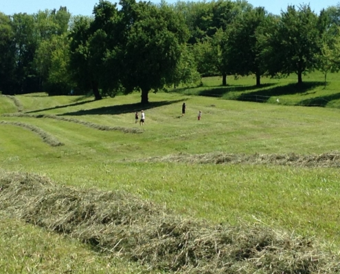 Das Kunstwiesen-Gras wurde zu Silage gemacht.