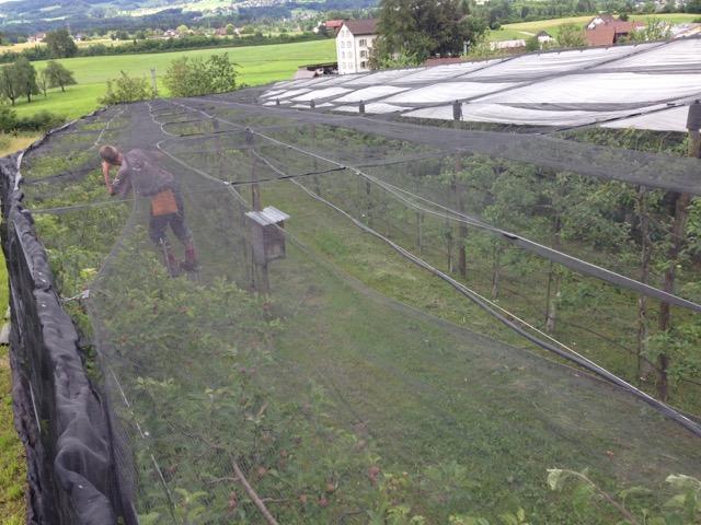 Beeren und Obst auf Hof Brachland unter Hagelschutznetzen