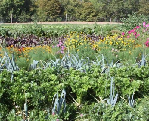 Möglichst vielfältig soll das Gemüseangebot sein – möglichst nachhaltig und auch schön anzusehen der Anbau.