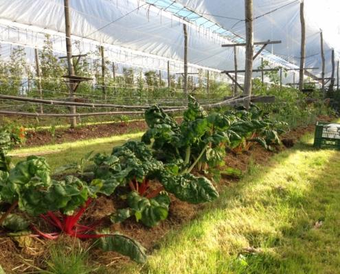 Obstbäume, Beeren und Gemüse mit Mulch