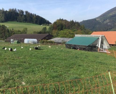 Hühnermobil mit Sau-Karawan und mobilem Gewächshaus im Hintergrund