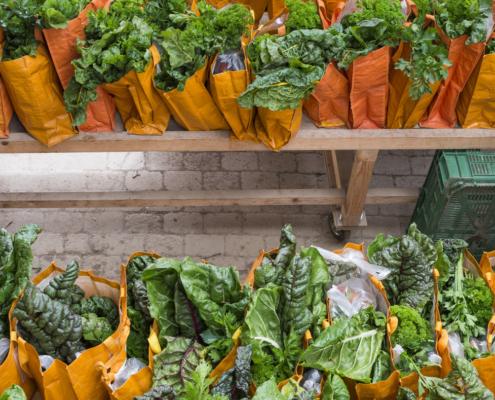 Solide Finanzen damit das Gemüse fair produziert und wöchentlich an alle Genossenschafter verteilt werden kann