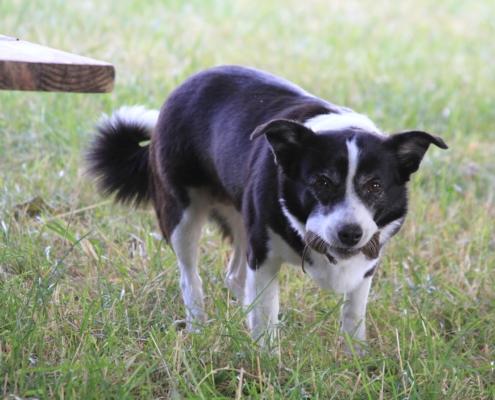 Hunde Biologisch Artgerecht Roh Fuettern – BARF