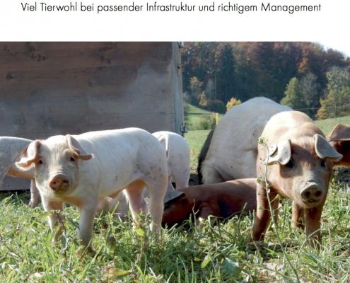 Schweinehaltung im Freiland – das Merkblatt stellt verschiedene Modelle in der Schweiz vor