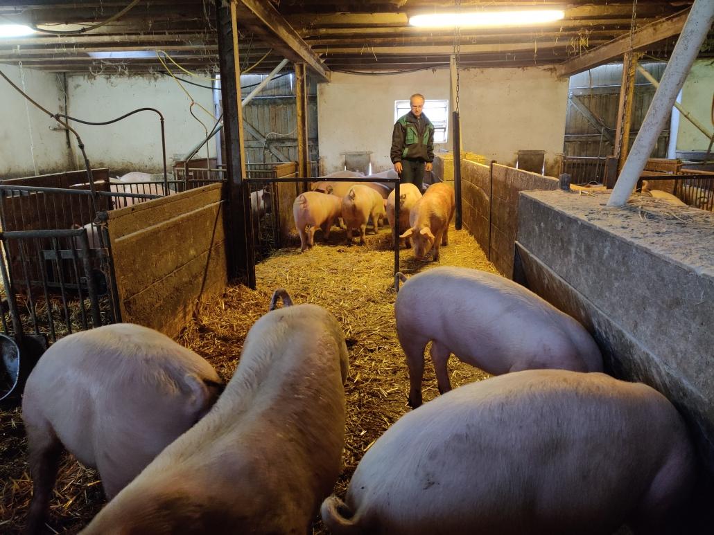 50 Schweine werden in einer Gruppe gehalten, auf dem Neuland-Hof Eckei sind es insgesamt 300 Mastschweine