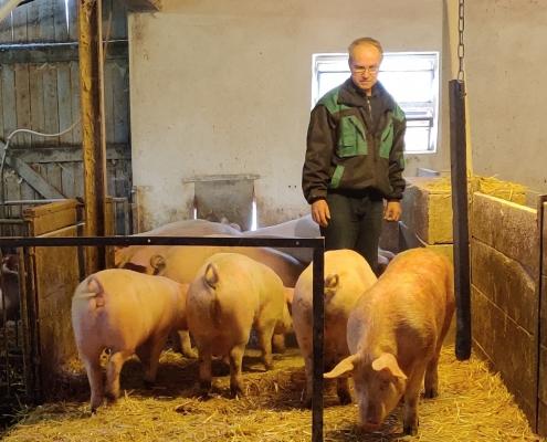 Ein Kupieren der Schwänze ist bei der Haltungsform auf dem Neulandhof Eckei nicht notwendig – dank mehr Platz, Haltung auf Stroh und mit Aussenauslauf für die Schweine