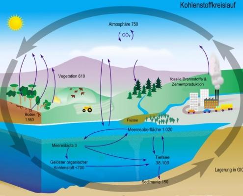 Pflanzenbestand und organischer Boden sind wichtige Kohlenstoffdepots, die wir mit unserer Wirtschaftsweise beeinflussen können.