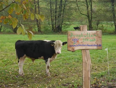 Milchkühe und Kälber möglichst artgerecht aufziehen und halten – dazu gehört bei Schmalors auch die Mast der Käber auf dem Hof