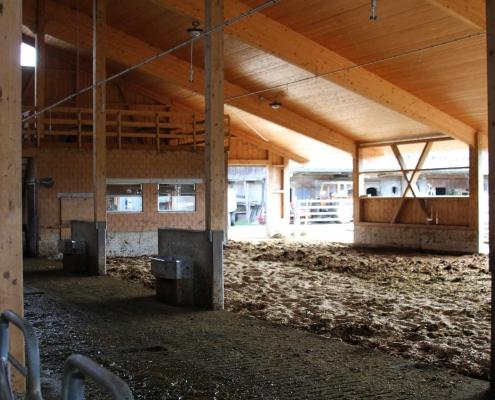 Ein Kompoststall – die Kühe stehen, liegen und laufen immer im Trockenen.