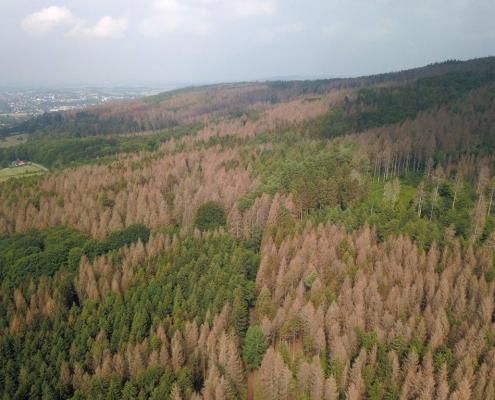 Erst die Dürre und dann der Borkenkäfer – viele Wälder in Nordrhein-Westfalen sind zerstört. Abräumen oder stehen lassen? Oder fällen und das Holz liegen lassen?                 Photo: Ulf Allhof-Cramer