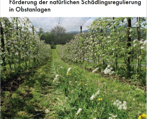 Schädlinge verursachen im Obstbau u.U. Ernteausfälle und Qualitätseinbussen. Das Merkblatt zeigt, wie mehrjährige Blühstreifen die Wirksamkeit der biologischen Schädlingsregulierung durch Räuber und Parasitoide verbessern.