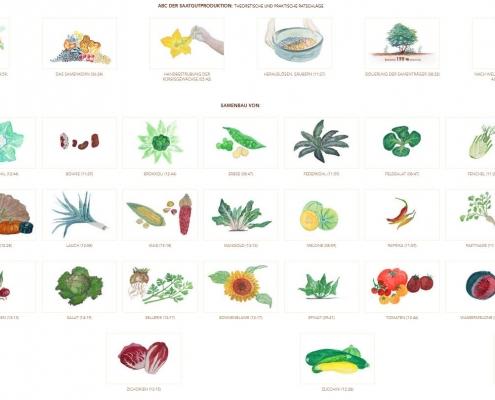 Die Lehrfilme zur Saatgutproduktion stehen Online zur Verfügung.