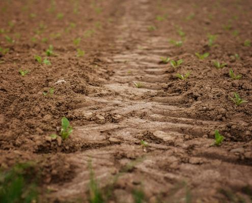 Pflanzenkohle wird zum Beispiel zur Bodenverbesserung eingesetzt (Bild pixabay)